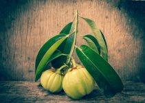 Garcinia Cambogia weight loss benefits